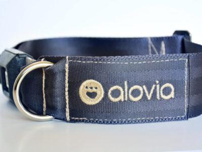 used seatbelt dog collar front